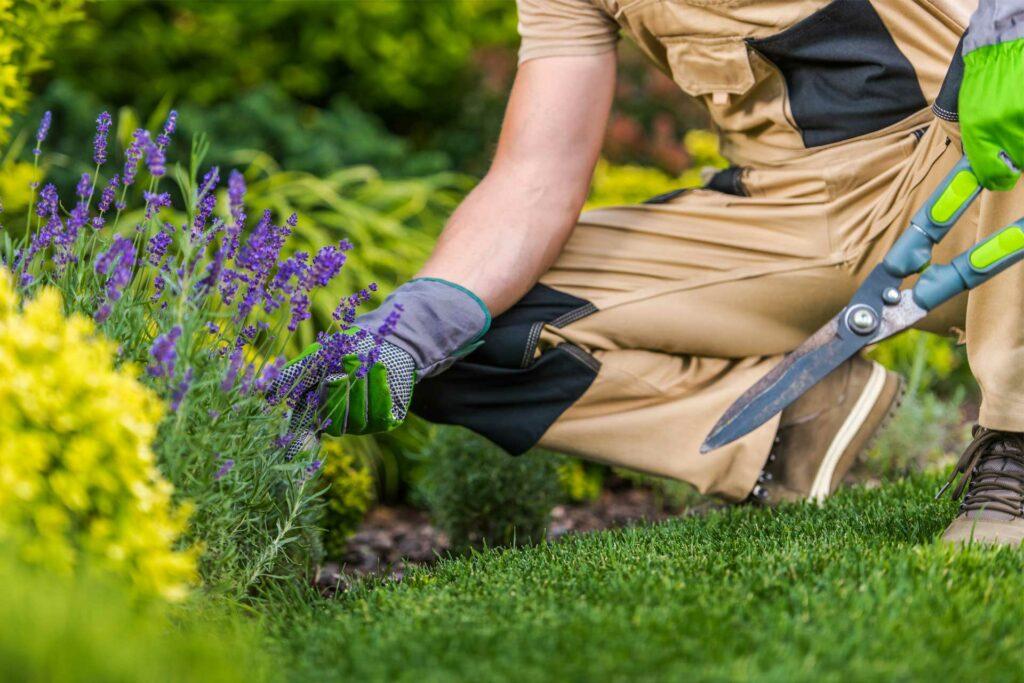 caucasian-gardener-and-the-garden-maintenance-job-EKN65NC.jpg