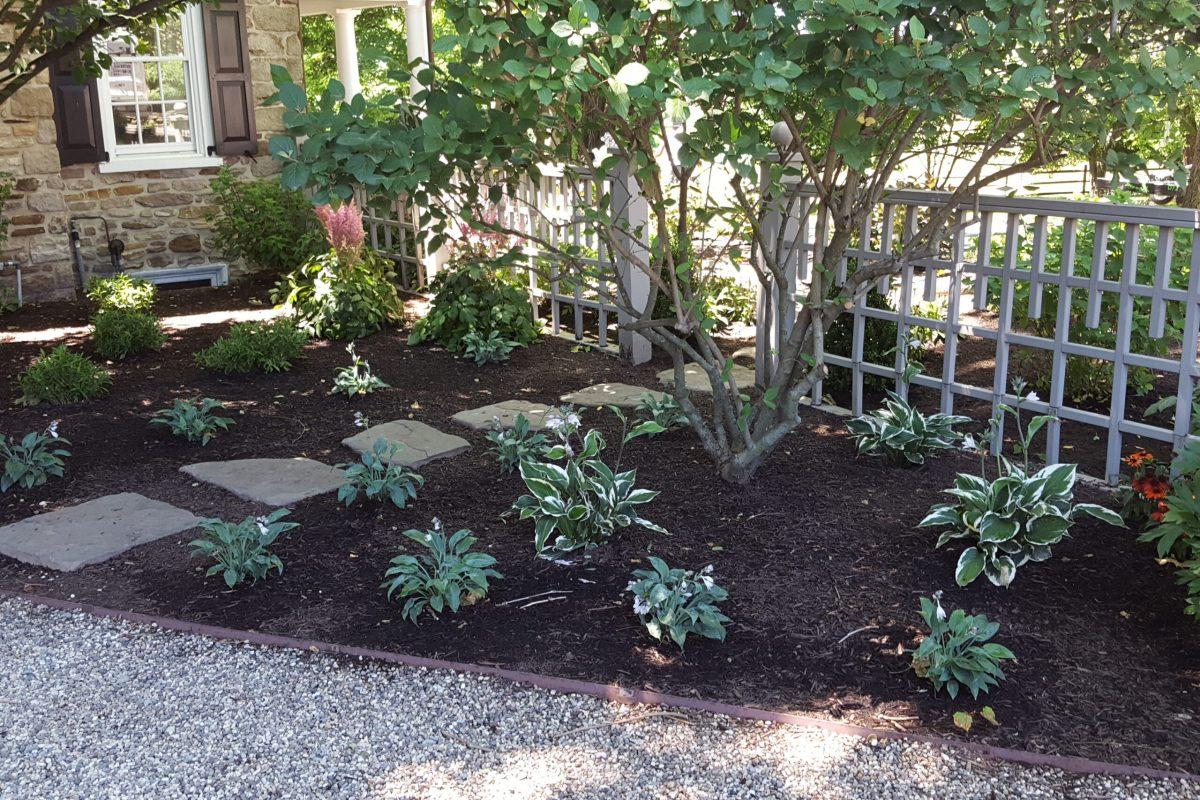 Shade Garden (2)
