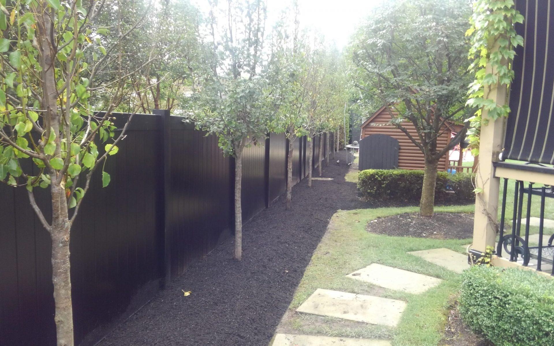 Trees Along Fence